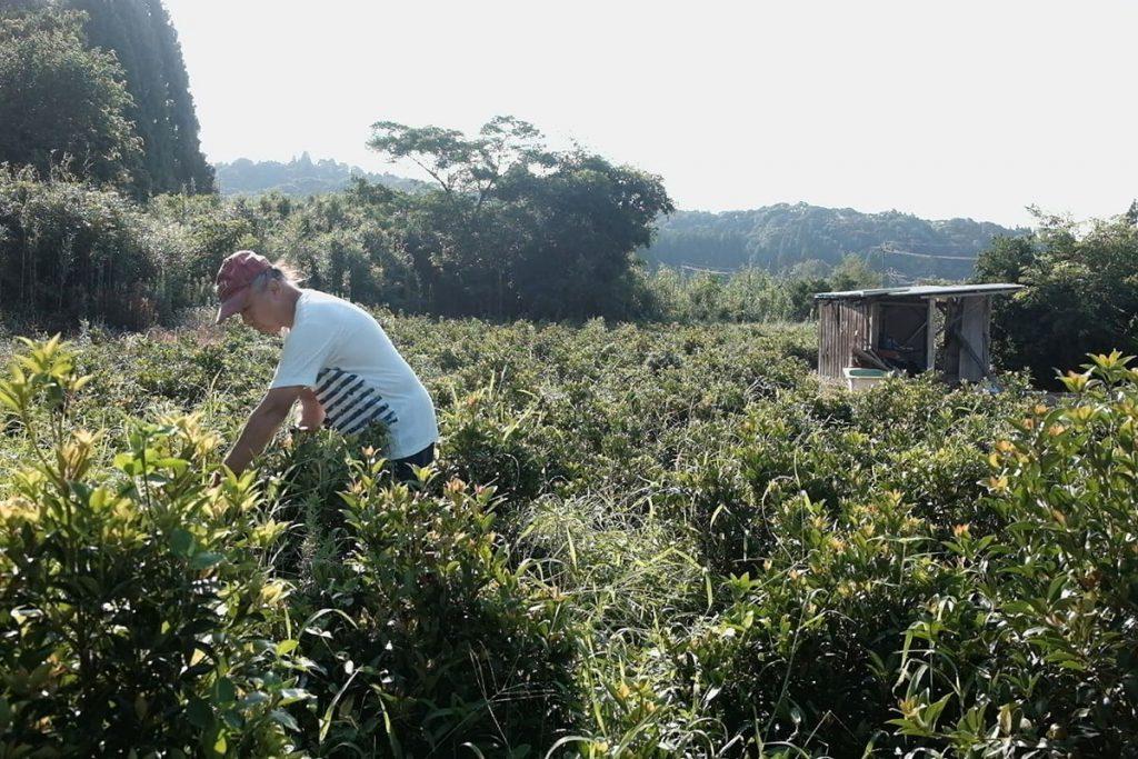 移住前の農業経験は家庭菜園程度だったという中川さん。ほぼ自己流で取り組んだ樒(しきみ)栽培は、生計を支えるまでになった