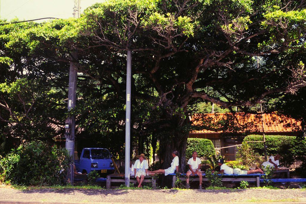 ガジュマルの木の下で