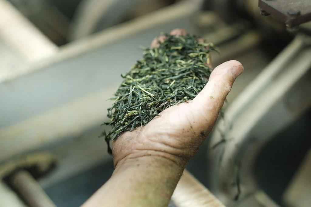 初めて向き合うお茶栽培