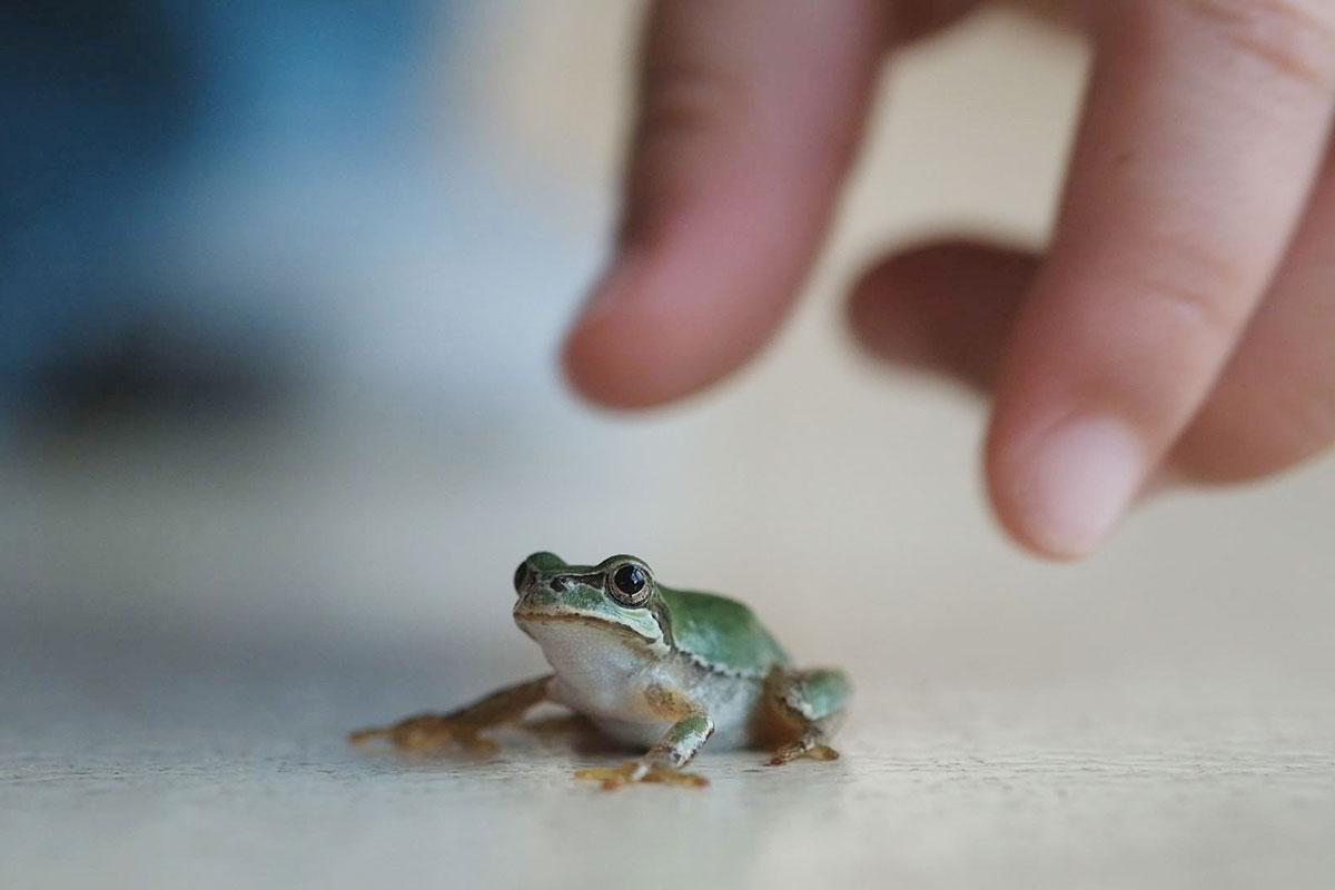 カエルも怖がらずに手で捕まえる十太くん