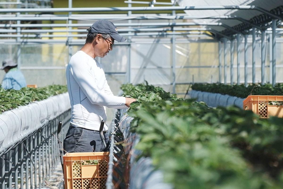 収穫の時期を目前にしっかり苗を見守る雅史さん
