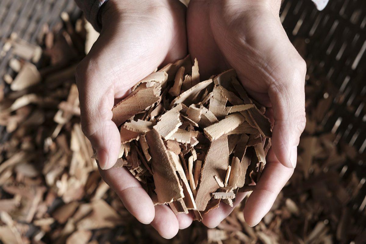 チップ状に粉砕された楠