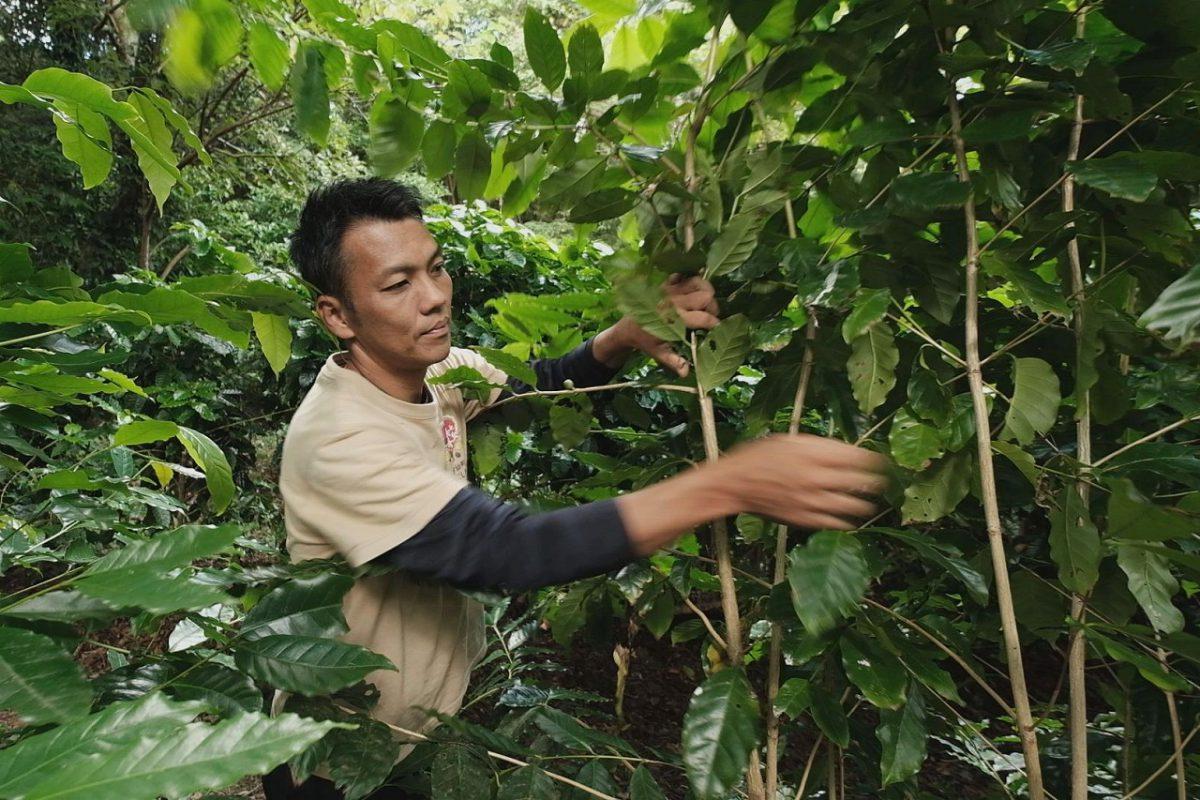 長い年月をかけて育ててきた宮出さんの珈琲の森
